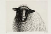 Beauté animale, de Dürer à Jeff Koons
