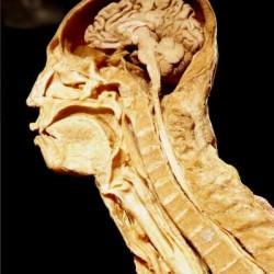 Vue de l'exposition 'Our Body / à corps ouvert'