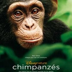 Chimpanzés - Affiche