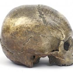 Crâne du philosophe René Descartes 1596-1650 - Musée de l'homme