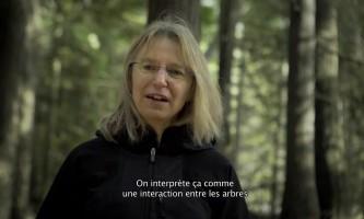 L'Intelligence des arbres - bande annonce